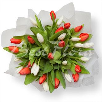 Купить тюльпаны спб дешево автоцветы семена купить в москве